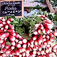 Radishes at the French open market