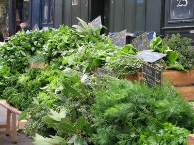mixed green salad garden fresh