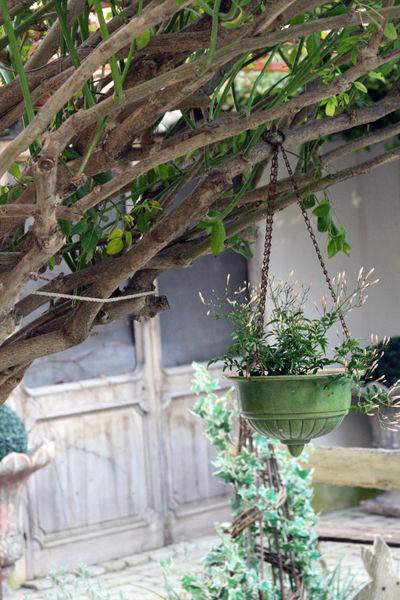 Jardin hanging plant