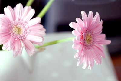 some pink flowers