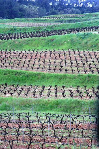 South-of-france-vines
