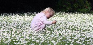 Baby picking daisies