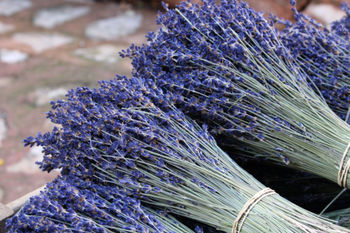 Colors-of-provence-lavender