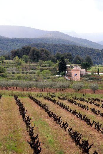 South-of-france-vineyard
