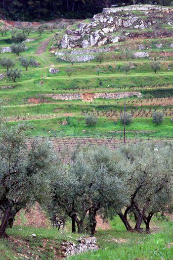 South-of-france-landscape
