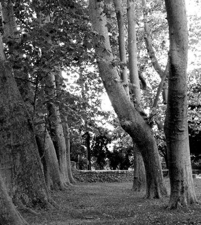 Chateau-Barben-garden