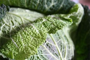Stuffed-cabbage