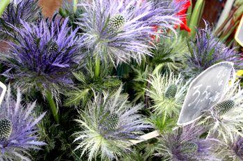 Open-market-flowers