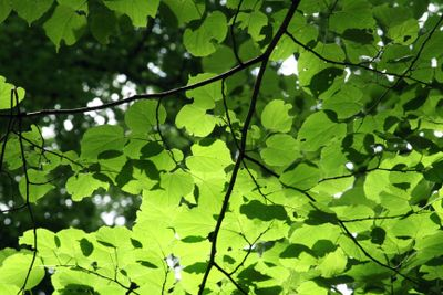 Nature-canopy