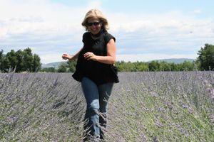 Lavender field valensole