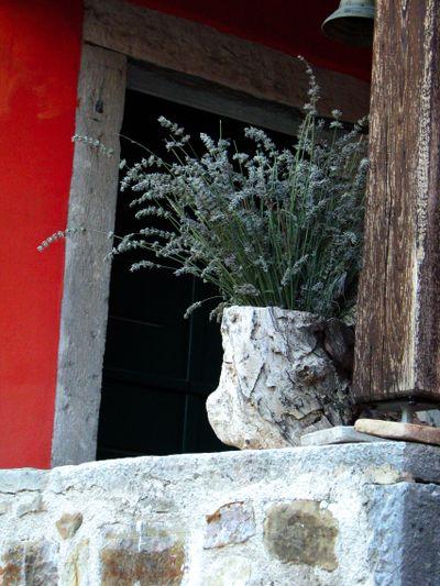 Lavender croatia