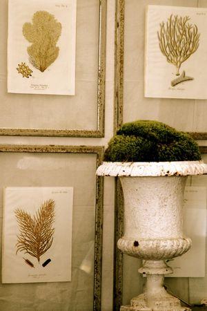 pressed seaweed prints early 19th century