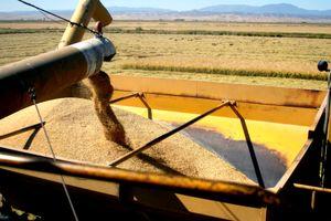 Rice bank out wagon