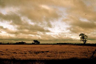 rice crop glenn county