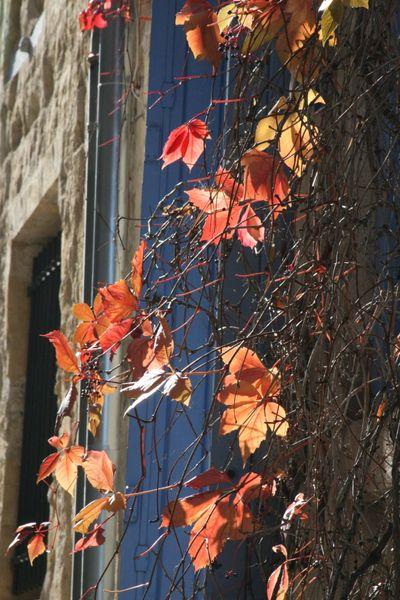 Season autumn leaves