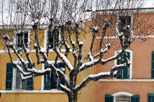 Plantain-snow