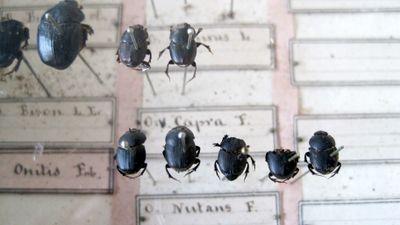 bugs under glass