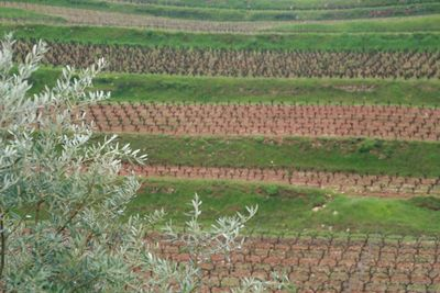 French southern vineyards