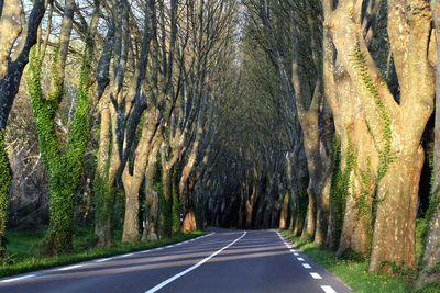 Line-of-trees