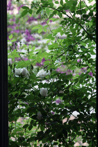 Through-the-window