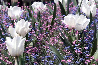 Paris-in-the-springtime
