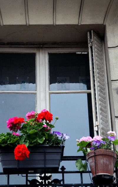 window with a planter of flowers