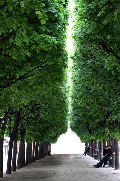 Trees-paris