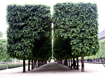 Palais-royal-trees-in-park