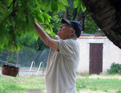 Mr-Porte-cherry-tree