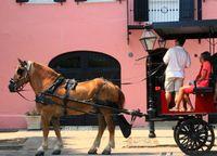 Charleston, horse ride