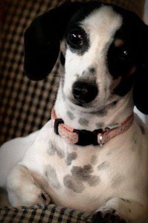 Shelley's Dog
