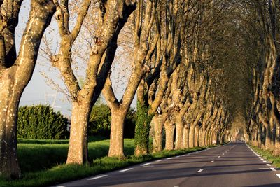 Tree-lined-road-in-France