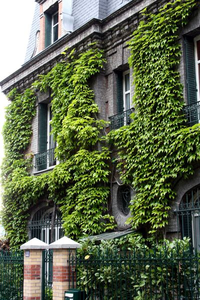 A-ivy covered house-in-Paris