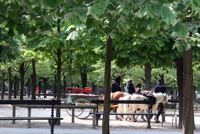 Ponies-in-paris