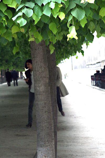Between-the-tree