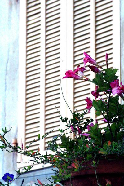 Flowers-by-shutters