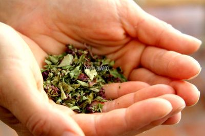 Handful of herbs