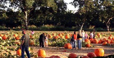 Bishop farms pumpkin