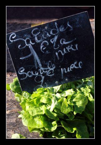 Salade 1 Euros
