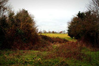 Field behind the grange