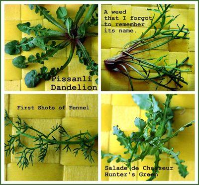 Pissanli, fennel, salade de chasseur