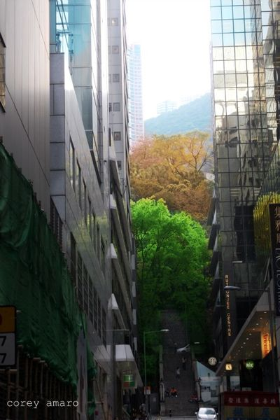 Green between the buildings
