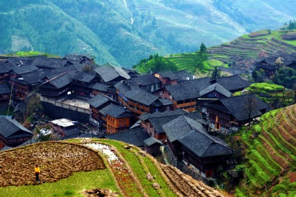 Longsheng terraced rice fields