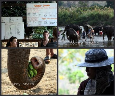 Elephant Nature park Lek