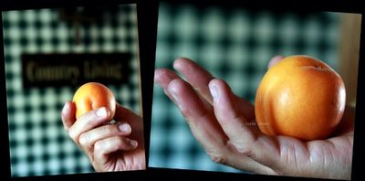 Big apricot