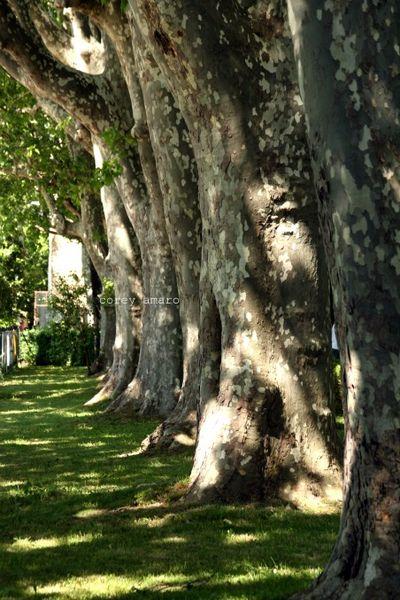 Plain trees