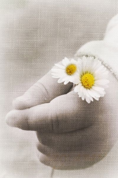 Baby's hand with daisies