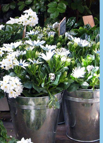 Bucket-of-flowers