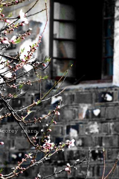 Breathing spring