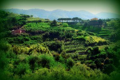 Cinque terre countryside